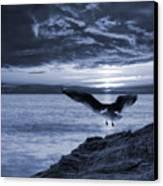 Seagull Canvas Print by Jaroslaw Grudzinski