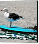 Seagull On A Surfboard Canvas Print by Christine Till