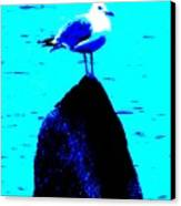 Seagull Scout Canvas Print