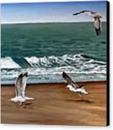 Seagulls 2 Canvas Print