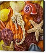 Seahorse And Assorted Sea Shells Canvas Print by Garry Gay