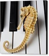 Seahorse On Keys Canvas Print by Garry Gay