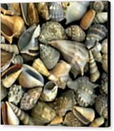 Seashell Medley Canvas Print