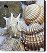 Seashells Canvas Print