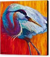 Second Glance - Great Blue Heron Canvas Print