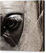 Stillness In The Eye Of A Horse Canvas Print