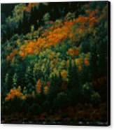 Sentinels Of September Serenity Canvas Print