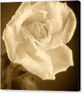 Sepia Rose With Rain Drops Canvas Print by M K  Miller