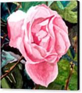 September Rose Canvas Print