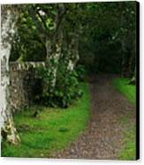 Shady Lane Canvas Print by Warren Home Decor