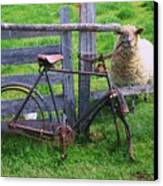 Sheep And Bicycle Canvas Print