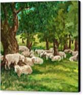 Sheep Pasture Ithaca New York Canvas Print by Ethel Vrana