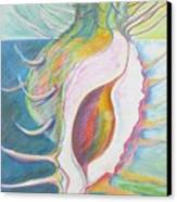 Shell Metamorphosis Canvas Print