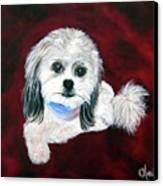 Shih Poo Canvas Print