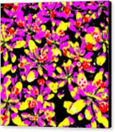 Shiraz Canvas Print by Eikoni Images