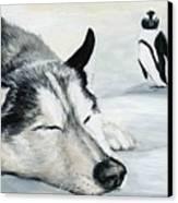 Siberian Huskey Canvas Print