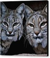 Side By Side Canvas Print by Elaine Malott
