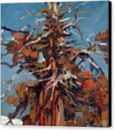 Sierra Juniper Canvas Print