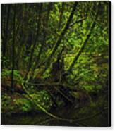Silent Forest Canvas Print by Stuart Deacon