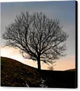 Silhouette Of A Tree On A Winter Day Canvas Print