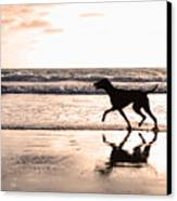 Silhouette Of Dog On Beach At Sunset Canvas Print by Susan Schmitz