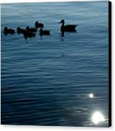 Silhouetted Duck Family Swims Canvas Print by Todd Gipstein