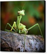 Silly Mantis Canvas Print by Karen M Scovill