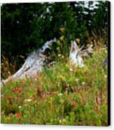 Silver Forest Meadow Canvas Print by Christine Burdine