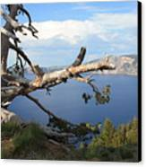 Silvery Tree Over Crater Lake Canvas Print