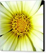 Simply Daisy Canvas Print by JoAnn SkyWatcher