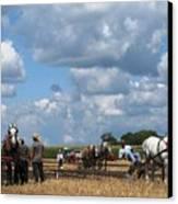 Six Horses Canvas Print