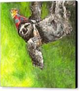 Sloth Birthday Party Canvas Print by Steve Asbell