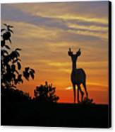 Small Buck Against Sunset Canvas Print by Ron Kruger