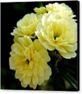 Small Yellow Roses Canvas Print