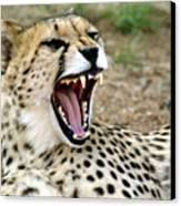 Smiling Cheetah Canvas Print