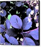 Smoke Tree Blues Canvas Print