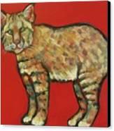 Smug Bobcat Canvas Print