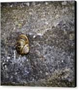 Snail At Ballybeg Priory County Cork Ireland Canvas Print