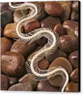 Snake Skeleton  Canvas Print by Garry Gay