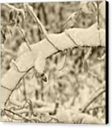 Snow Arch Canvas Print by LeeAnn McLaneGoetz McLaneGoetzStudioLLCcom