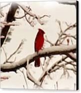 Snow Cardinal Canvas Print by Janet Pugh