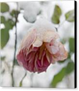Snow-covered Rose Flower Canvas Print