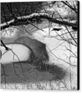 Snow Detail Canvas Print