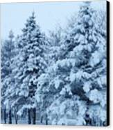 Snow Flocked Pines Canvas Print