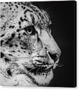 Snow Leopard Canvas Print by Jeff Swanson