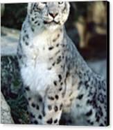 Snow Leopard Uncia Uncia Portrait Canvas Print by Gerry Ellis
