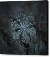 Snowflake Photo - Vega Canvas Print by Alexey Kljatov