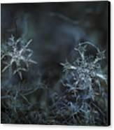 Snowflake Photo - When Winters Meets - 2 Canvas Print by Alexey Kljatov