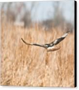 Soaring Hawk Over Field Canvas Print by Douglas Barnett