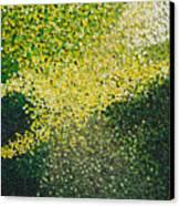 Soft Green Light  Canvas Print